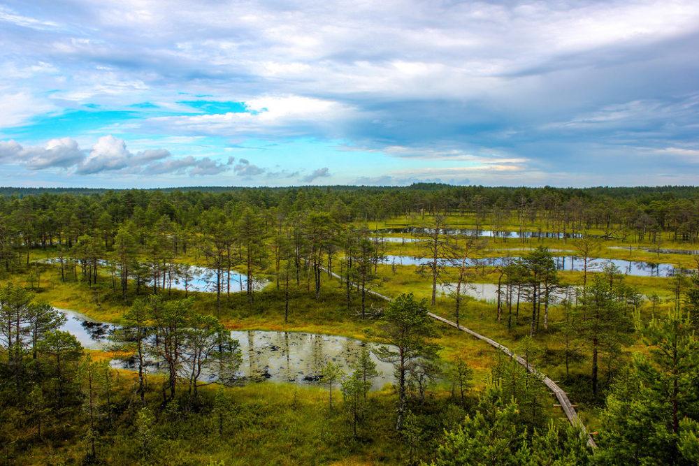 Turbera de Viru en el Parque Nacional de Lahemaa, Estonia.