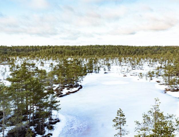 Turbera de Viru, Estonia.